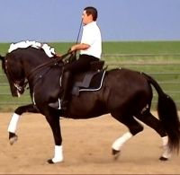 Azteca horse for sale, shown here is traditional portuguese attire.