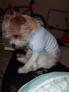 Baby Onesie Reconstructed to Puppy Teeshirt. small dog apparel. diy. upcycle. reuse. clothes.