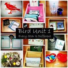 Every Star Is Different: Animal Unit: Birds- Montessori-inspired learning activities with free printables.