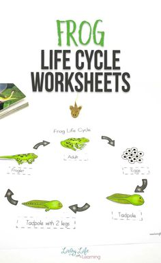 Learn to identify the different parts of a frog and the stages of growth of frogs with this cool frog life cycle worksheets for frog lovers. You'll see how they transform from egg, to tadpole to adult frogs. Kindergarten Science Experiments, Science Lesson Plans, Science Activities For Kids, Toddler Learning Activities, Printable Activities For Kids, Preschool Worksheets, Free Printables, Homeschool Science Curriculum
