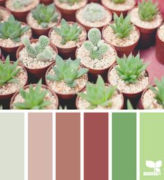 cacti color    Patio?