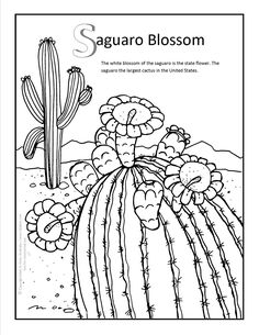 coloring pages for saugaros | 31 Best Arizona Coloring Pages images | Coloring pages ...