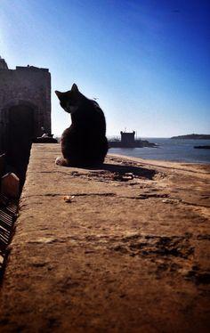 Le chat sur les remparts d'Essaouira - Maroc. © Copyright Yves Philippe
