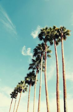 Lovely Clusters - Beautiful Shops: palm tree art print // photography // mid century california art print