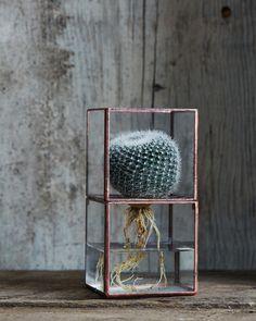 ♕cactus - 10¹² Terra Hydro Terrarium - Small