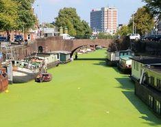 De gracht is altijd groener in Groningen