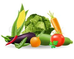 Vector of 'still life of vegetables vector illustration' on Colourbox
