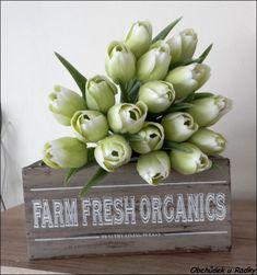 Umělé tulipány zelenobílé Succulents, Organic, Plants, Succulent Plants, Plant, Planets