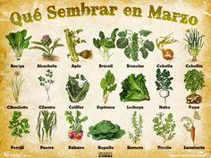 calendario de siembra de marzo: HAGAMOS NUESTRO HUERTO CASERO...¡YA!