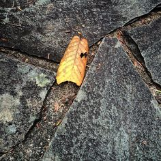 #WonderWatch 2015-160 Leaf Alone #solitude #solitary #zen #impermanence #SandyLongPhotos #nature #naturephotography #fall #autumn #AtYourFeet #ArtfulNature #EverydayEncounters #leaf #GlimpsesOfFall #instagram #PA #Ponder #stone #UpperDelawareRiverRegion #yellow #Contemplate