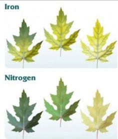 Lots of images showing plant nutrient deficiencies on the linked page.