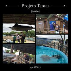 Projeto Tamar Sul