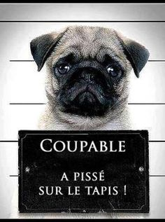 Pugshot Book WARNING - After reading this book you'll never look at Pugs the same way again! Pugs may be small, Pug Love, I Love Dogs, Cute Dogs, Big Dogs, Funny Dogs, Funny Animals, Cute Animals, Pug Mug, Mug Shots