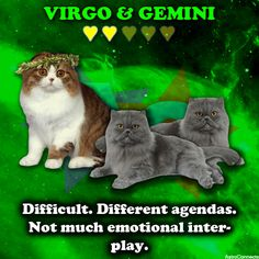 & in We have much more info if you register here: astroconn Gemini And Virgo, Gemini Zodiac, Numerology, Cats, Dating, Virgos, Horoscopes, Yup, Truths