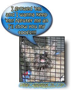 Col. Potter Cairn Rescue Network: Wacky Wednesday!  Sometimes we have to convince our furkids that being responsible is the right thing to do!
