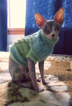 Cat clothes warm cat sweater sweater for sphynx by PurringPyjamas