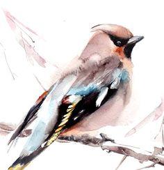 Aves Ampelis europeo pintura acuarela imprimir por CanotStopPrints