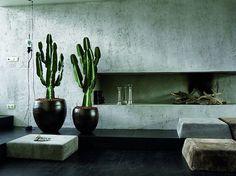 Awesome Indoor Cactus Ideas For Cozy Home Interior Design - napier news Tall Cactus, Indoor Cactus, Indoor Plants, Cactus Cactus, Cactus Types, Green Cactus, Green Plants, Interior Design Plants, Plant Design