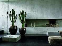 vkvvisuals.com/blog | ON TREND: SUCCULENTS AND CACTI FOR INTERIORS | http://blog.vkvvisuals.com