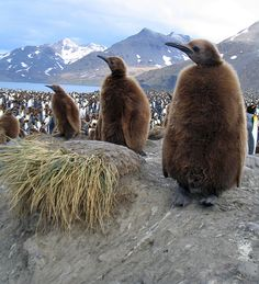 south geogia and south sandwich islands - british dependency known for their penguins and other antarctic mammals.