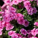 List of plants including height, light requirements and USDA zones