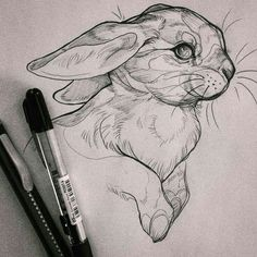 Exciting Learn To Draw Animals Ideas. Exquisite Learn To Draw Animals Ideas.