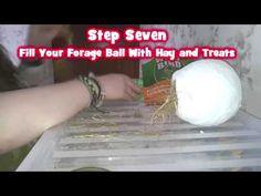 DIY Hamster Toy   Small Animal Forage Ball - YouTube
