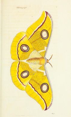 v.16 - The naturalist's miscellany, or Coloured figures of natural objects - Biodiversity Heritage Library