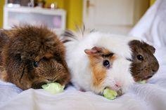browneyesmonster:    My little cucumber gang, omnomnom :B