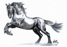 friesian horse drawing - Google Search