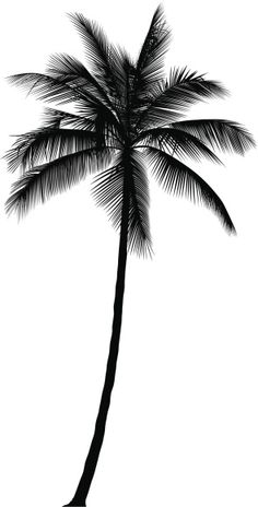 Best Palm Illustrations, Royalty-Free Vector Art and Clip Art - Palm Tree Vector Art Illustration - Palm Tree Sketch, Palm Tree Drawing, Tree Sketches, Tattoo Sketches, Palm Tattoos, Body Art Tattoos, Leaves Illustration, Illustration Tattoo, Tree Tattoo Designs