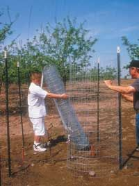 Fruit Trees — Problems and Solutions!
