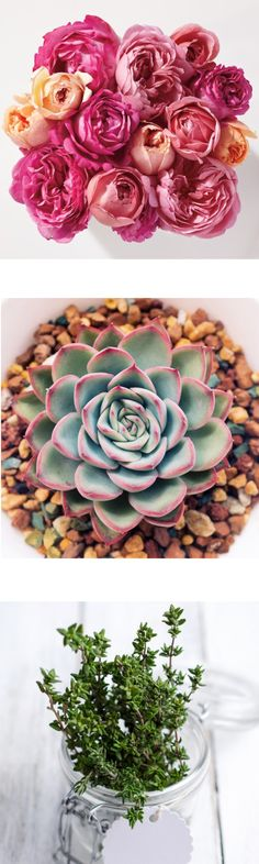 10 Pet-Friendly Houseplants for Your Home | Martha Stewart Living - From a well-placed fern to a bouquet of vibrant flowers, houseplants instantly improve the atmosphere of any room. But what if your pet has a tendency to nibble on your decorative greens? Some plants might be pretty, but some are deadly to animals. Here, we found ten plants that are safe for both cats and dogs, as approved by the American Society for the Prevention of Cruelty to Animals (ASPCA).