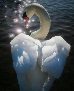 Swan Love, Beautiful Swan, Beautiful Moments, Beautiful Birds, Animals Beautiful, Nature Animals, Animals And Pets, Cute Animals, Cygnus Olor