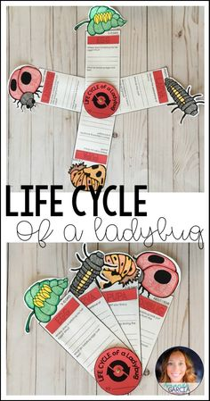 Students will love learning about the life cycle of a ladybug with this fun and interactive STEAM project! Kids research each stage from egg to larva to pupa as they research the ladybug. An ideal STEM project for second grade, third grade, and fourth grade!