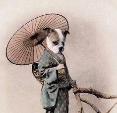 Yoshi  Vintage Dog 5x7 Print  Anthropomorphic  by AnimalFancy, $15.00