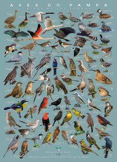 Beautiful Birds, Animals Beautiful, Colorful Birds, Small Birds, Names Of Birds, Bird Poster, Wild Creatures, Animal Species, Backyard Birds