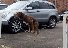 el perro del circo