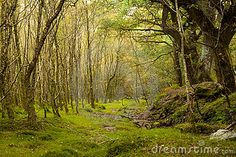 Fairy forest by Grgk, via Dreamstime