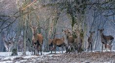 Fotografia utilizatorului Flaviu Adrian Lupsan din categoria Fotografia wild-life a fost realizata cu Nikon D7100
