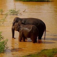 Babies Need Their Moms: Stop the Illegal Asian Elephant Trade..  TAKE…
