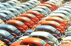 A Dream Line Up of Volkswagen Beetles In A variety Of Colours ♥♥♥
