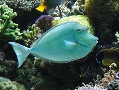 Salt water fish images | Marine Fish Master's Gallery