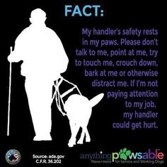 Here are the top 10 things Service Dog handlers want you to know about their canine partner, the law, access rights, and Service Dog etiquette. Service Dog Training, Service Dogs, Training Tips, Psychiatric Service Dog, Pay Attention To Me, Dog Anxiety, Dog Facts, Guide Dog, Therapy Dogs