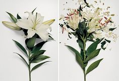 "Broken Flowers by Jon Shireman "" Beauty is indeed fleeting, especially when it is frozen in liquid nitrogen and smashed on a hard surface. New York photographer Jon Shireman soaked various flowers in. Martin Klimas, Foto Still, Liquid Nitrogen, Natural Forms, Flower Photos, Fresh Flowers, Dried Flowers, Bunt, Flower Power"