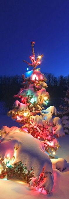 snow drift....I loved seeing snow cover the pine trees lit with Christmas lights outside my parents bay windows.