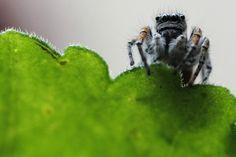Una araña sobre una hoja. Foto: Reuters