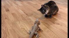 Cat meets Dragon