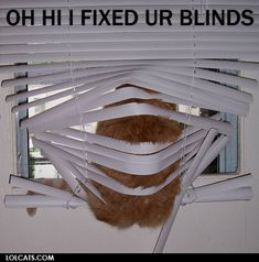 I know this feeling...not a blind in my house my kitty's haven't destroyed.