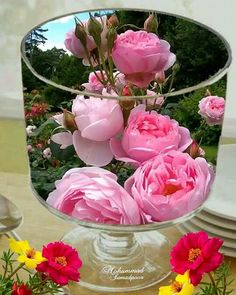 No automatic alt text available. Beautiful Flowers Images, Beautiful Nature Wallpaper, Flower Images, Beautiful Roses, Good Morning Flowers, Good Morning Images, My Flower, Flower Art, Kristen Stewart Pictures
